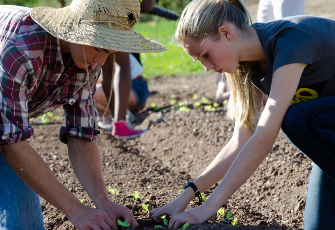 Thacher students help plant vegetables for Earthtrine Farm. Photo: Colly Smith '16