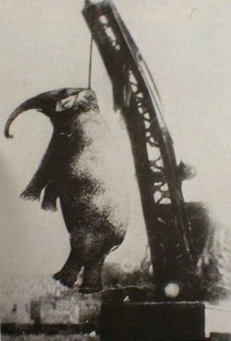 mary-the-elephant